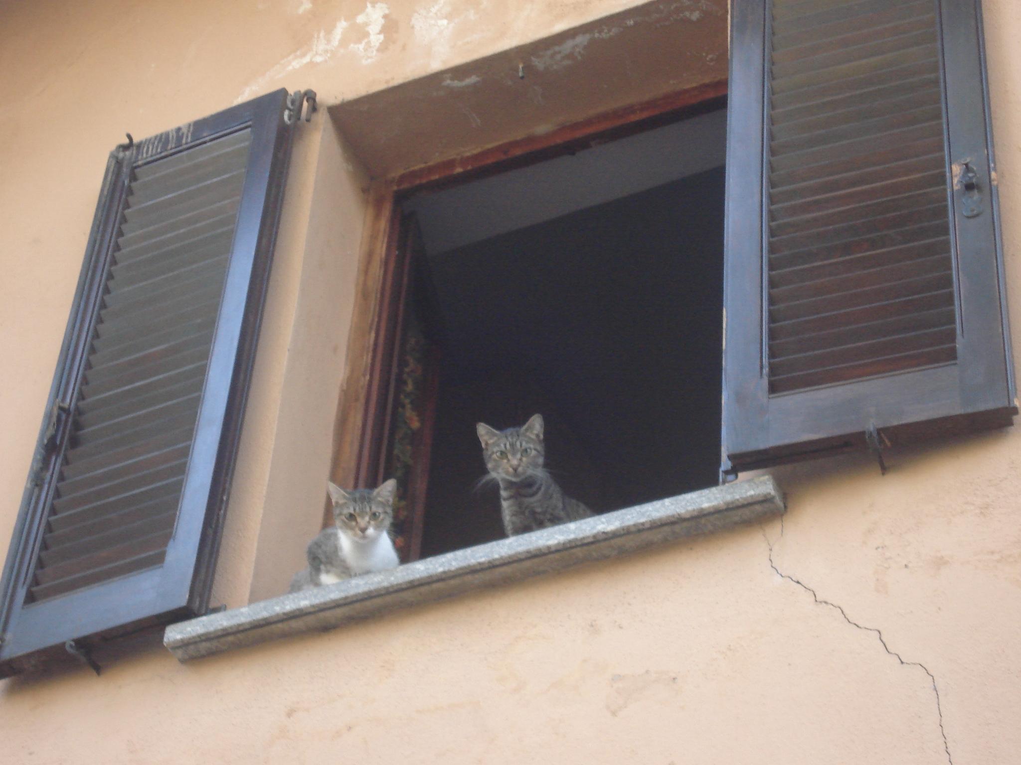 Gatti curiosi su davanzale di finestra con crepa paolazan - Davanzale finestra ...