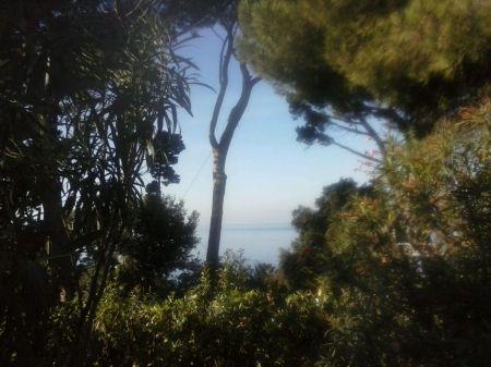 biodiversità su mare calmo